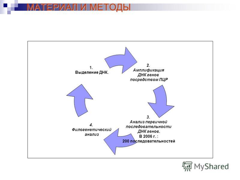 МАТЕРИАЛ И МЕТОДЫ 2. Амплификация ДНК генов посредством ПЦР 3. Анализ первичной последовательности ДНК генов. В 2006 г. : 200 последовательностей 4. Филогенетический анализ 1. Выделение ДНК.
