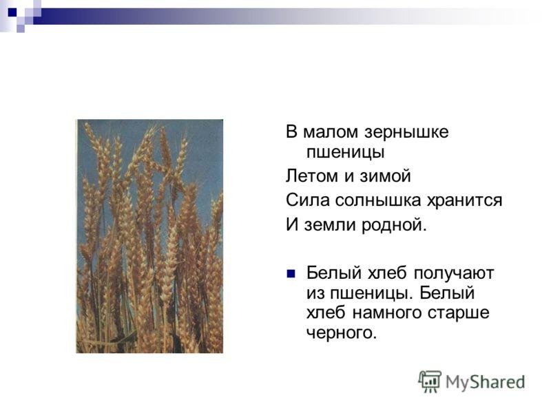 В малом зернышке пшеницы Летом и зимой Сила солнышка хранится И земли родной. Белый хлеб получают из пшеницы. Белый хлеб намного старше черного.