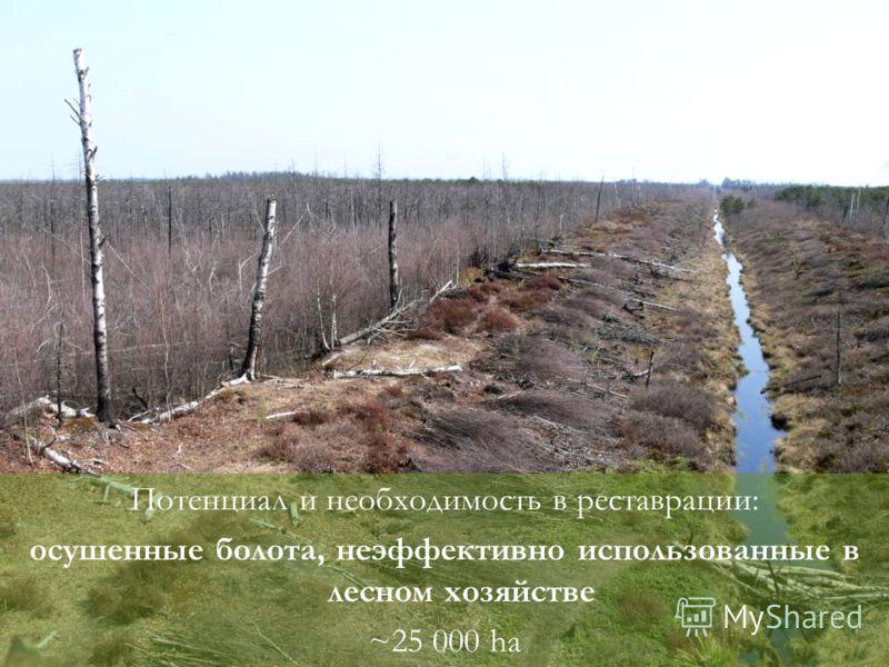 Потенциал и необходимость в реставрации: осушенные болота, неэффективно использованные в лесном хозяйстве ~25 000 ha
