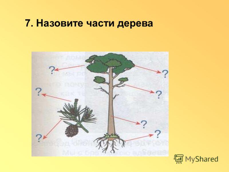 7. Назовите части дерева
