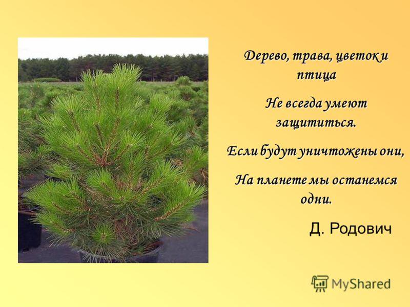 Дерево, трава, цветок и птица Не всегда умеют защититься. Если будут уничтожены они, На планете мы останемся одни. Д. Родович