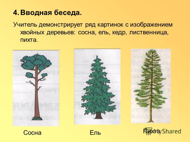 4.Вводная беседа. Учитель демонстрирует ряд картинок с изображением хвойных деревьев: сосна, ель, кедр, лиственница, пихта. Сосна Ель Пихта