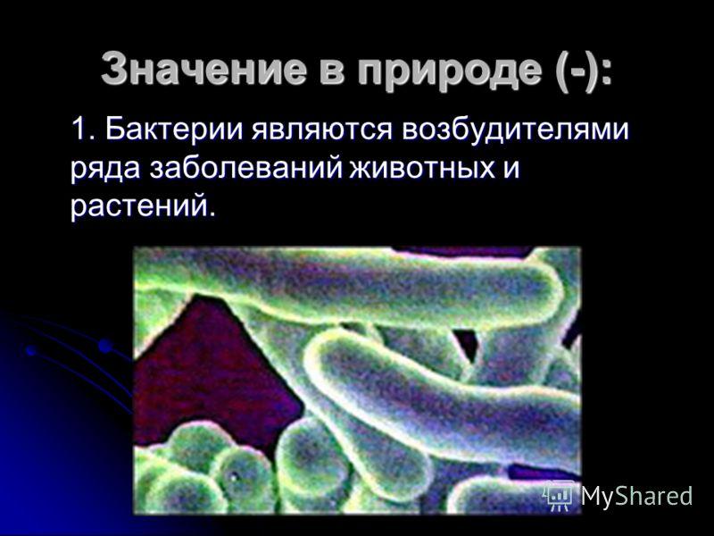 Значение в природе (-): 1. Бактерии являются возбудителями ряда заболеваний животных и растений.