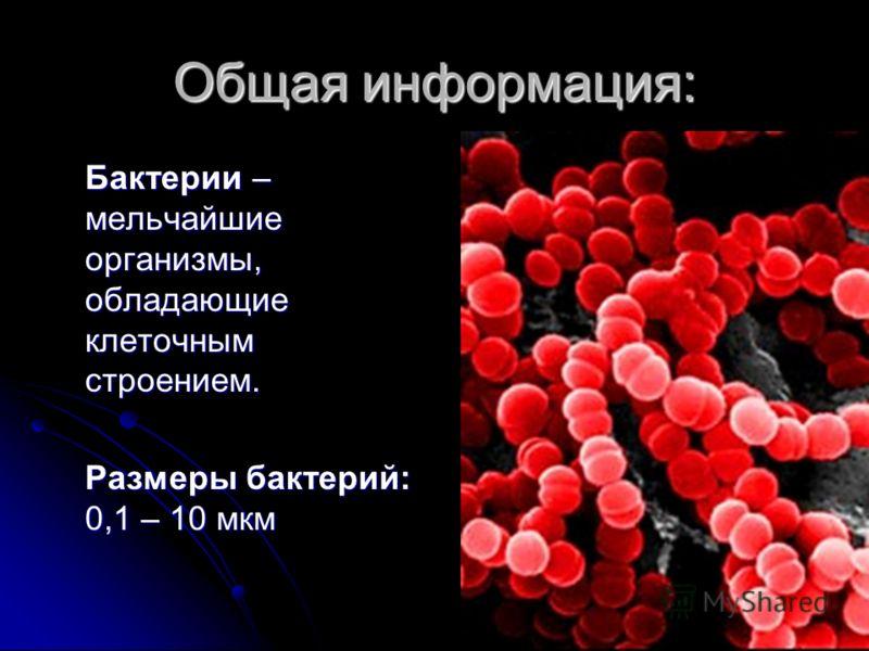 Общая информация: Бактерии – мельчайшие организмы, обладающие клеточным строением. Размеры бактерий: 0,1 – 10 мкм