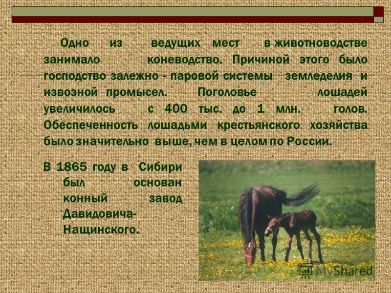 Одно из ведущих мест в животноводстве занимало коневодство. Причиной этого было господство залежно - паровой системы земледелия и извозной промысел. Поголовье лошадей увеличилось с 400 тыс. до 1 млн. голов. Обеспеченность лошадьми крестьянского хозяй