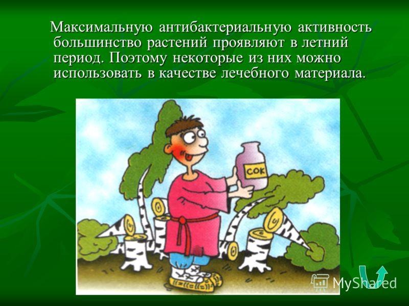 Максимальную антибактериальную активность большинство растений проявляют в летний период. Поэтому некоторые из них можно использовать в качестве лечебного материала. Максимальную антибактериальную активность большинство растений проявляют в летний пе