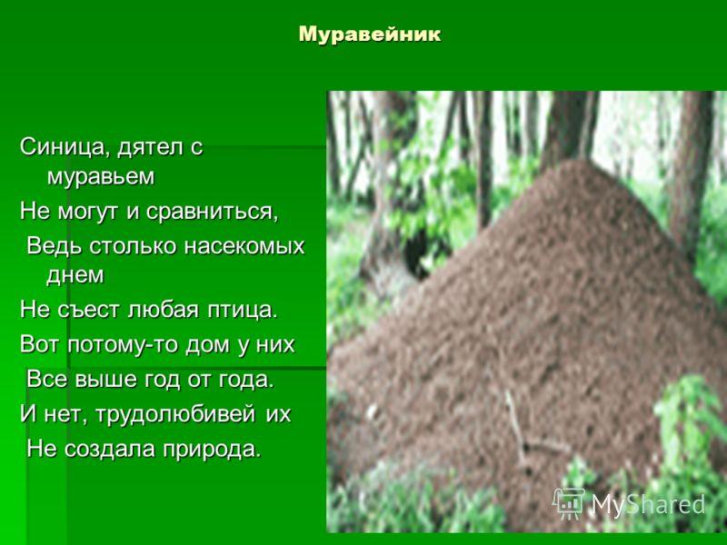 Муравейник Синица, дятел с муравьем Не могут и сравниться, Ведь столько насекомых днем Ведь столько насекомых днем Не съест любая птица. Вот потому-то дом у них Все выше год от года. Все выше год от года. И нет, трудолюбивей их Не создала природа. Не