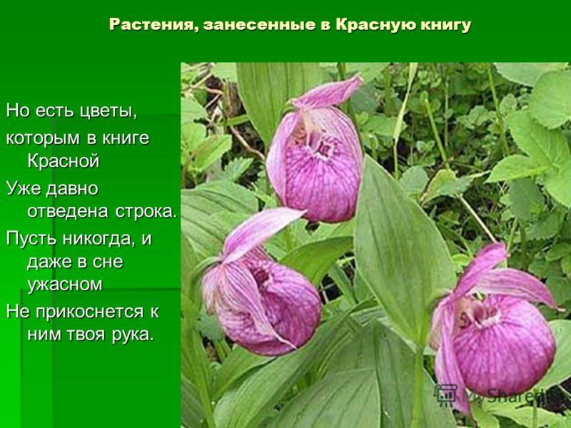 Растения, занесенные в Красную книгу Но есть цветы, которым в книге Красной Уже давно отведена строка. Пусть никогда, и даже в сне ужасном Не прикоснется к ним твоя рука.