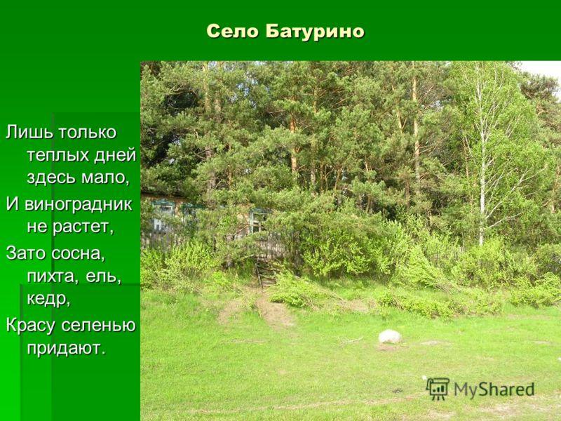 Село Батурино Лишь только теплых дней здесь мало, И виноградник не растет, Зато сосна, пихта, ель, кедр, Красу селенью придают.