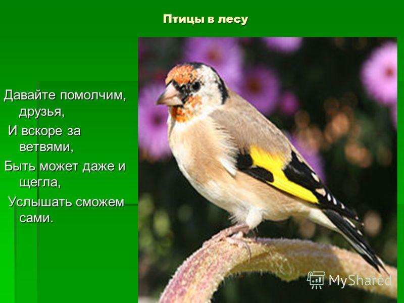 Птицы в лесу Давайте помолчим, друзья, И вскоре за ветвями, И вскоре за ветвями, Быть может даже и щегла, Услышать сможем сами. Услышать сможем сами.