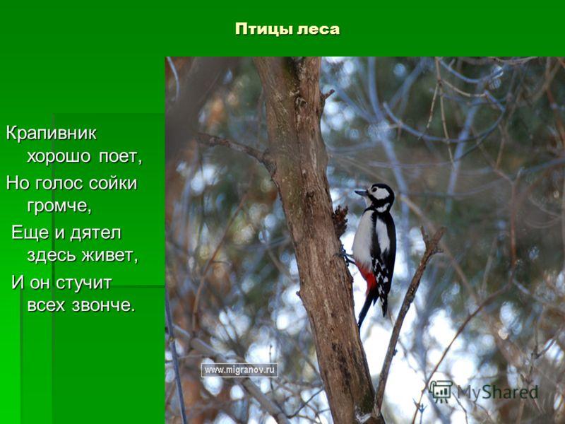 Птицы леса Крапивник хорошо поет, Но голос сойки громче, Еще и дятел здесь живет, Еще и дятел здесь живет, И он стучит всех звонче. И он стучит всех звонче.