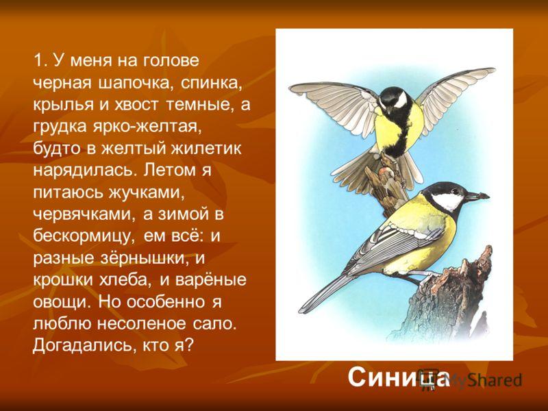 1. У меня на голове черная шапочка, спинка, крылья и хвост темные, а грудка ярко-желтая, будто в желтый жилетик нарядилась. Летом я питаюсь жучками, червячками, а зимой в бескормицу, ем всё: и разные зёрнышки, и крошки хлеба, и варёные овощи. Но особ