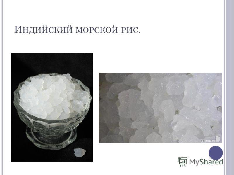 И НДИЙСКИЙ МОРСКОЙ РИС.