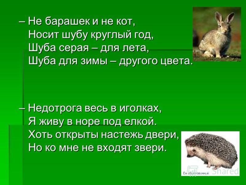 – Не барашек и не кот, Носит шубу круглый год, Шуба серая – для лета, Шуба для зимы – другого цвета. – Недотрога весь в иголках, Я живу в норе под елкой. Хоть открыты настежь двери, Но ко мне не входят звери.
