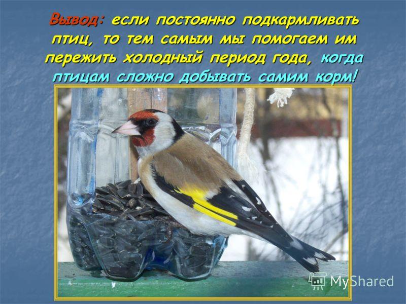 Вывод: если постоянно подкармливать птиц, то тем самым мы помогаем им пережить холодный период года, когда птицам сложно добывать самим корм!