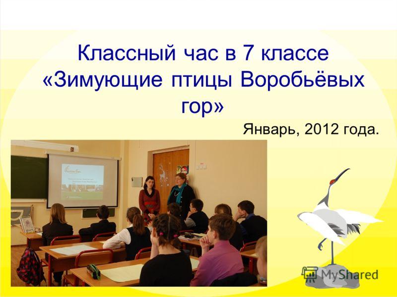 Классный час в 7 классе «Зимующие птицы Воробьёвых гор» Январь, 2012 года.
