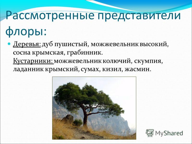 Рассмотренные представители флоры: Деревья: дуб пушистый, можжевельник высокий, сосна крымская, грабинник. Кустарники: можжевельник колючий, скумпия, ладанник крымский, сумах, кизил, жасмин.