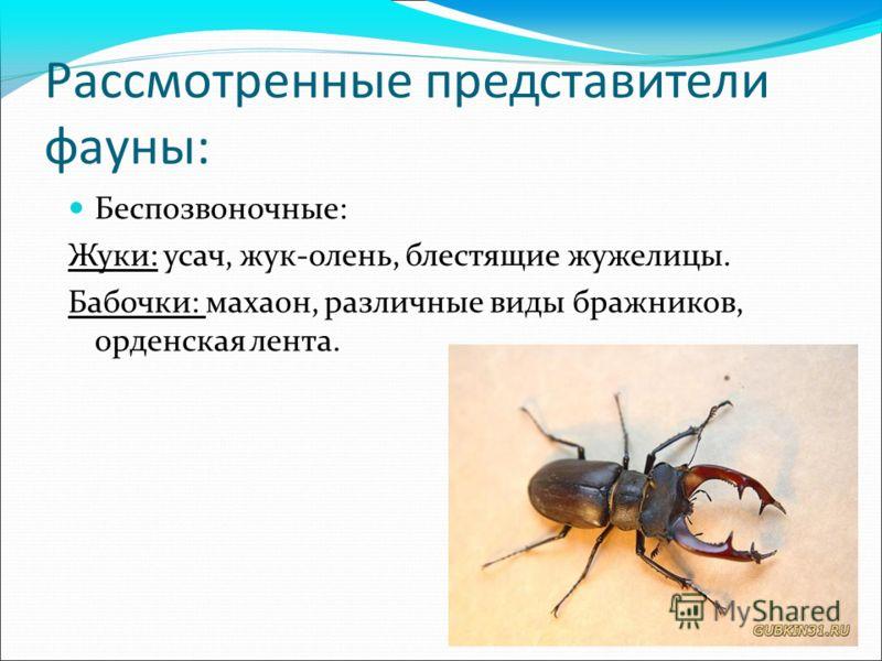 Рассмотренные представители фауны: Беспозвоночные: Жуки: усач, жук-олень, блестящие жужелицы. Бабочки: махаон, различные виды бражников, орденская лента.