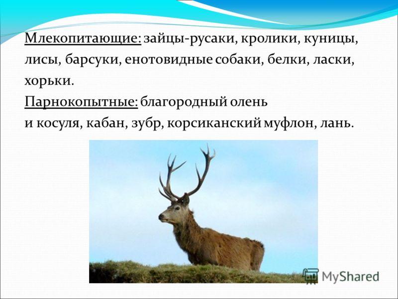 Млекопитающие: зайцы-русаки, кролики, куницы, лисы, барсуки, енотовидные собаки, белки, ласки, хорьки. Парнокопытные: благородный олень и косуля, кабан, зубр, корсиканский муфлон, лань.
