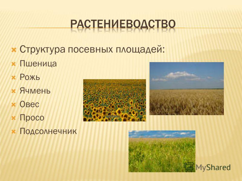 Структура посевных площадей: Пшеница Рожь Ячмень Овес Просо Подсолнечник