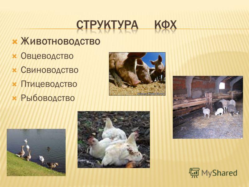 Животноводство Овцеводство Свиноводство Птицеводство Рыбоводство