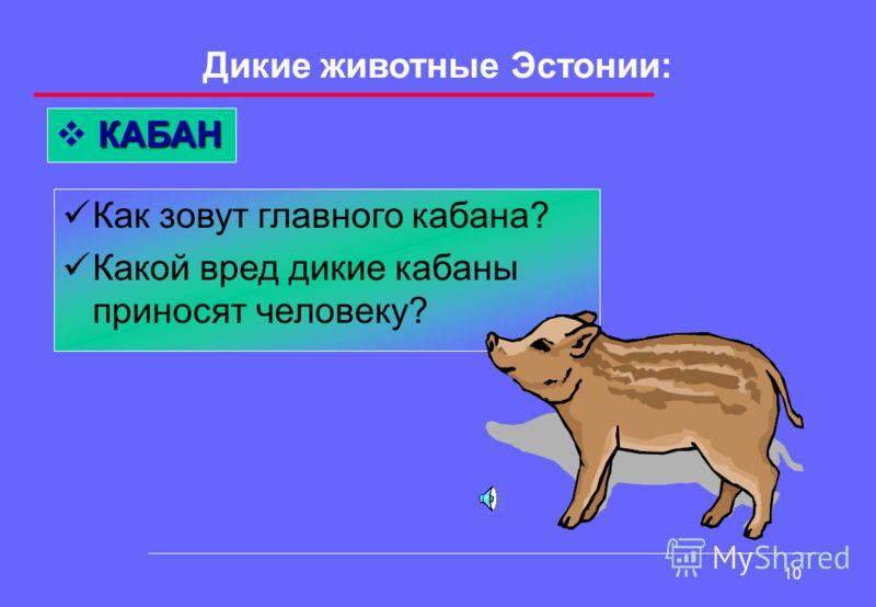 9 Дикие животные Эстонии: РЫСЬ Рысь – мясоед или вегетарианец? Рысь нападает на жертву с земли или с дерева?