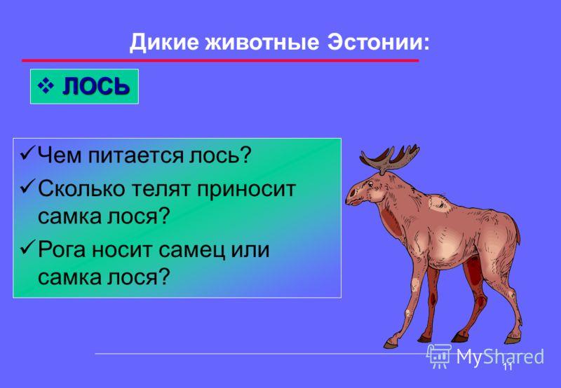10 Дикие животные Эстонии: КАБАН Как зовут главного кабана? Какой вред дикие кабаны приносят человеку?