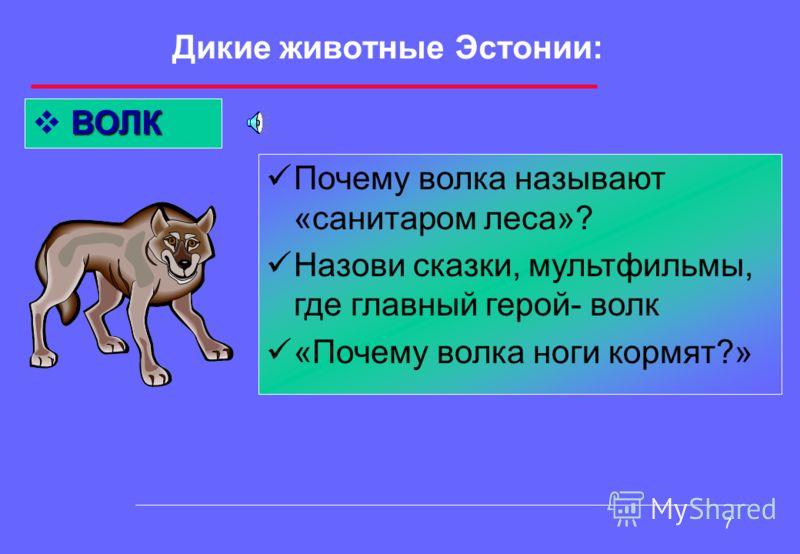 6 Дикие животные Эстонии: ЛИСИЦА Назови качество характера, которым чаще всего нарекают лису? Вспомни басни, поговорки о лисах Какие виды лис знаешь?