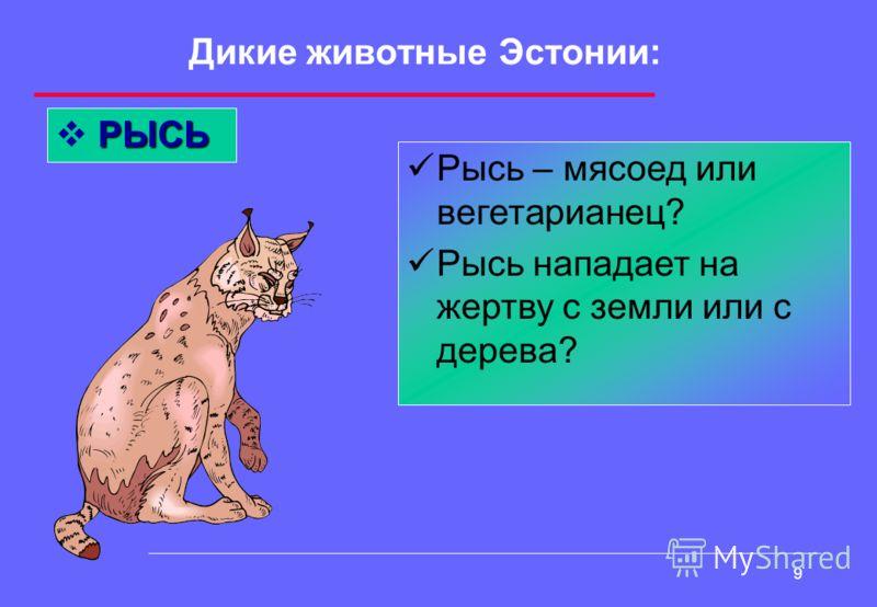 8 Дикие животные Эстонии: МЕДВЕДЬ Какой вид медведя обитает в Эстонии? Любимое лакомство медведя? Назови сказки, поговорки о медведях