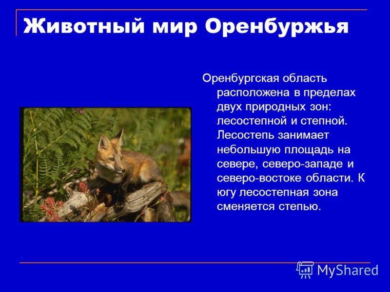 Животный мир Оренбуржья Оренбургская область расположена в пределах двух природных зон: лесостепной и степной. Лесостепь занимает небольшую площадь на севере, северо-западе и северо-востоке области. К югу лесостепная зона сменяется степью.