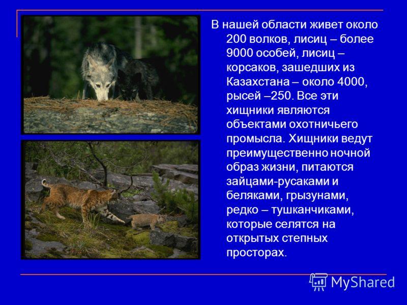 В нашей области живет около 200 волков, лисиц – более 9000 особей, лисиц – корсаков, зашедших из Казахстана – около 4000, рысей –250. Все эти хищники являются объектами охотничьего промысла. Хищники ведут преимущественно ночной образ жизни, питаются
