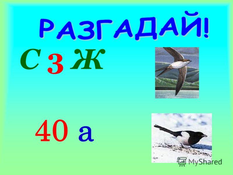 С 3 Ж 40 а