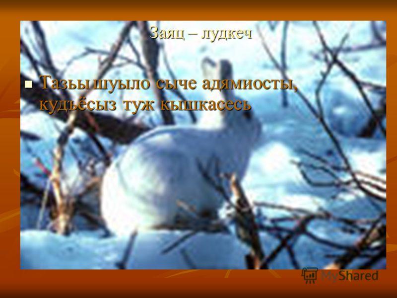 Заяц – лудкеч Заяц – лудкеч Тазьы шуыло сыче адямиосты, кудъёсыз туж кышкасесь Тазьы шуыло сыче адямиосты, кудъёсыз туж кышкасесь