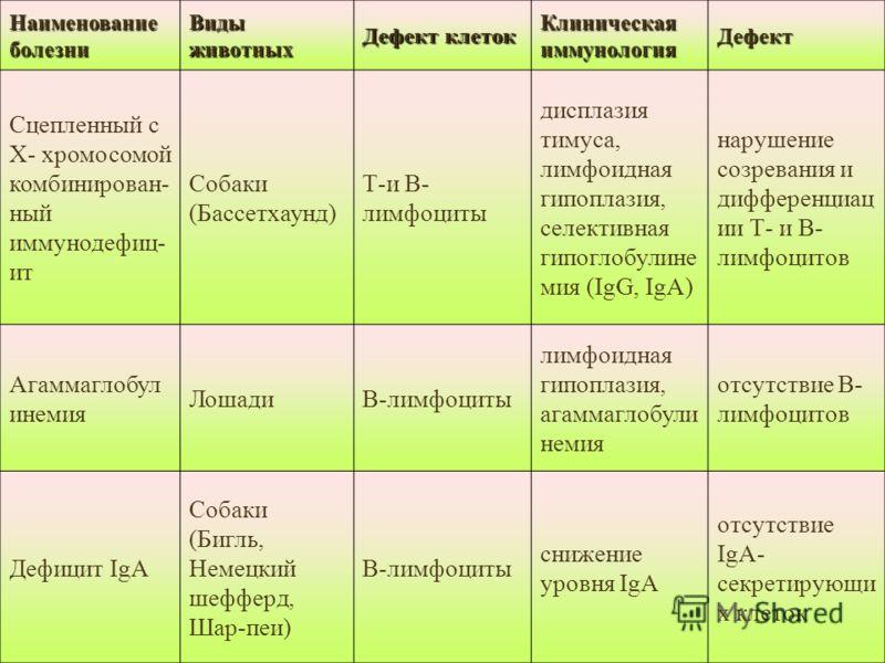 Наименование болезни Виды животных Дефект клеток Клиническая иммунология Дефект Сцепленный с X- хромосомой комбинирован- ный иммунодефиц- ит Собаки (Бассетхаунд) Т-и В- лимфоциты дисплазия тимуса, лимфоидная гипоплазия, селективная гипоглобулине мия