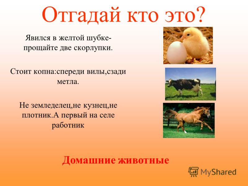 Дикие животные. Живут в лесах,водоемах. Сами заботятся о себе. Сами заботятся о потомстве. Сами строят жилье. Сами добывают себе пищу.