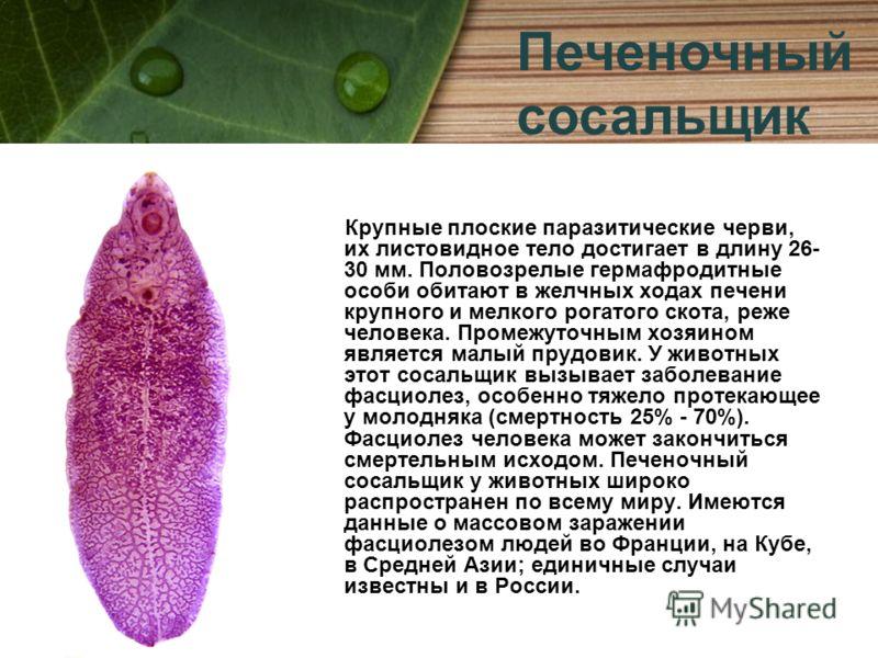 Крупные плоские паразитические черви, их листовидное тело достигает в длину 26- 30 мм. Половозрелые гермафродитные особи обитают в желчных ходах печени крупного и мелкого рогатого скота, реже человека. Промежуточным хозяином является малый прудовик.