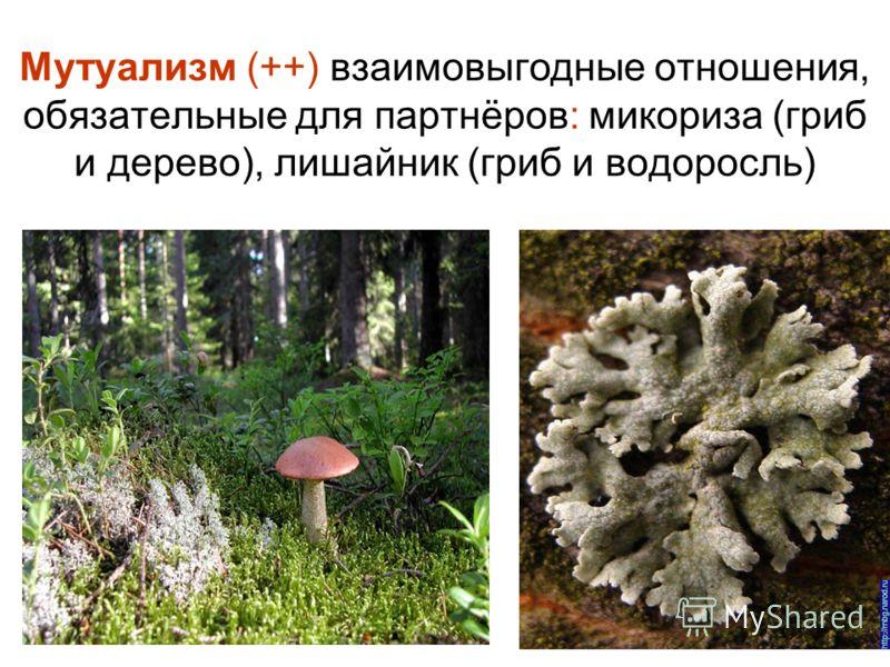 Мутуализм (++) взаимовыгодные отношения, обязательные для партнёров: микориза (гриб и дерево), лишайник (гриб и водоросль)