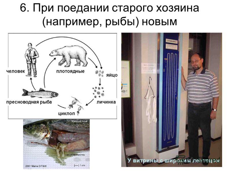 6. При поедании старого хозяина (например, рыбы) новым пресноводная рыба человекплотоядные циклоп яйцо личинка У витрины с широким лентецом