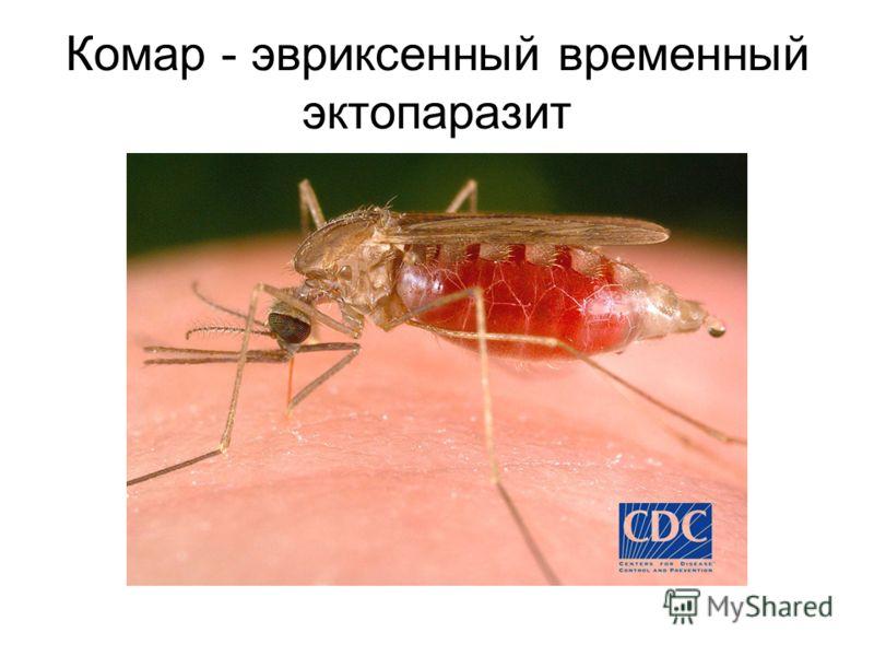 Комар - эвриксенный временный эктопаразит