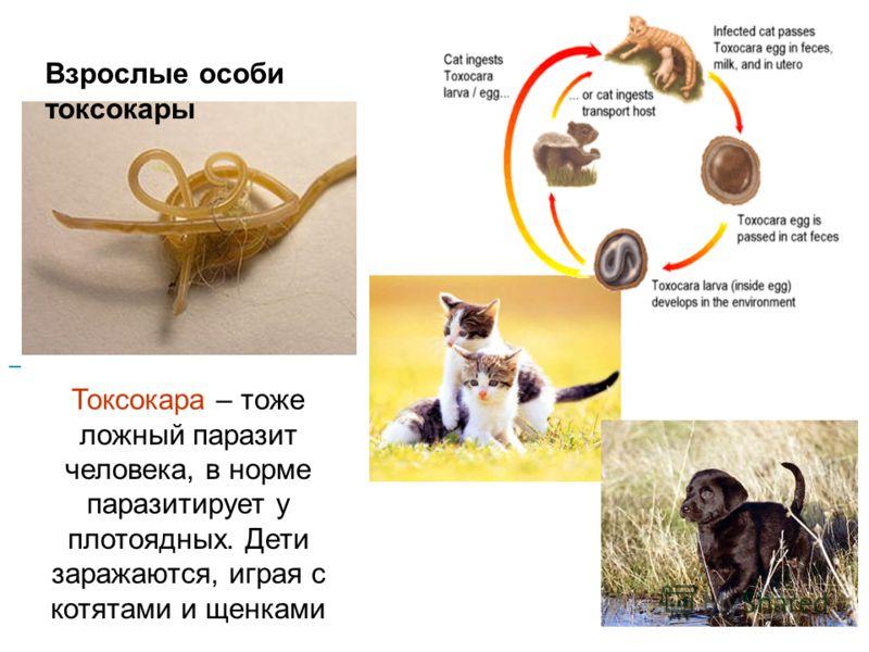 Что делают глисты в организме человека фото