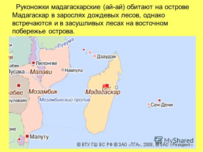 Руконожки мадагаскарские (ай-ай) обитают на острове Мадагаскар в зарослях дождевых лесов, однако встречаются и в засушливых лесах на восточном побережье острова.
