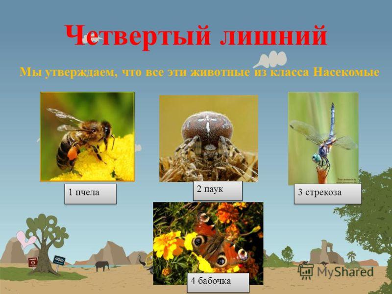 Четвертый лишний Мы утверждаем, что все эти растения из семейства Розоцветных 1 Яблоня 2 Боярышник 3 Чертополох 4 земляника