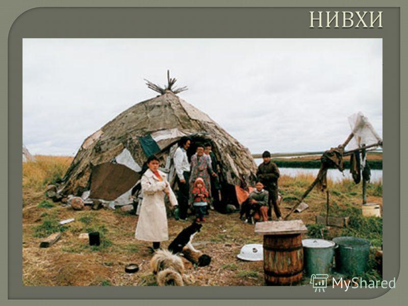 народ в Российской Федерации (5,1 тыс. чел., 2002), коренное население низовий реки Амур в Хабаровском крае (2,4 тыс. чел.) и острова Сахалин (2,4 тыс. чел.). Основу хозяйства нивхов составляли рыболовство, морской зверобойный промысел. Единственным
