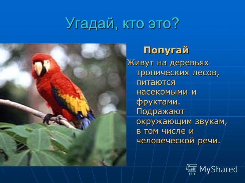 Угадай, кто это? До чего красив наряд! Ярко пёрышки горят! Будет с человеком жить Птица сможет говорить. Попугай Попугай Живут на деревьях тропических лесов, питаются насекомыми и фруктами. Подражают окружающим звукам, в том числе и человеческой речи