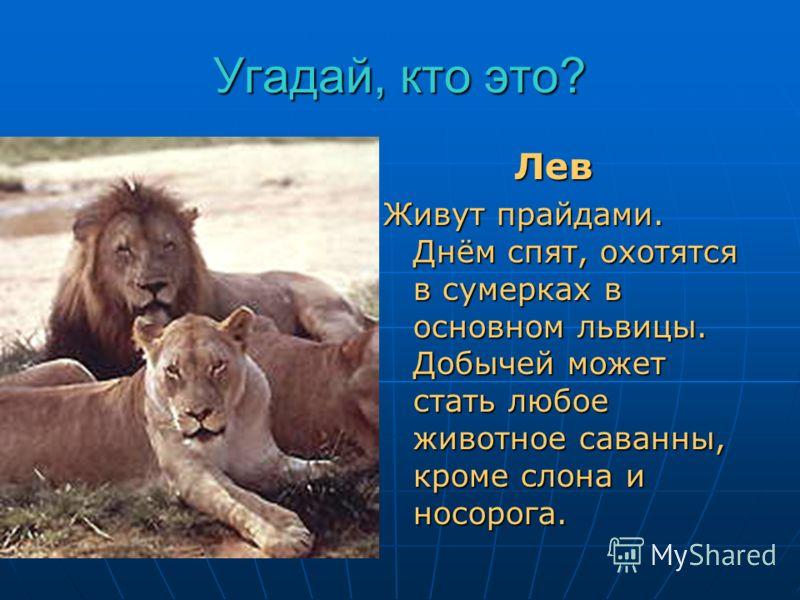 Угадай, кто это? Он свирепый и красивый, Царь зверей с роскошной гривой. Лев Лев Живут прайдами. Днём спят, охотятся в сумерках в основном львицы. Добычей может стать любое животное саванны, кроме слона и носорога.