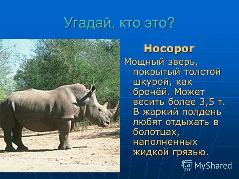 Угадай, кто это? Он врага бодает рогом, Не шутите с …. Носорог Носорог Мощный зверь, покрытый толстой шкурой, как бронёй. Может весить более 3,5 т. В жаркий полдень любят отдыхать в болотцах, наполненных жидкой грязью.
