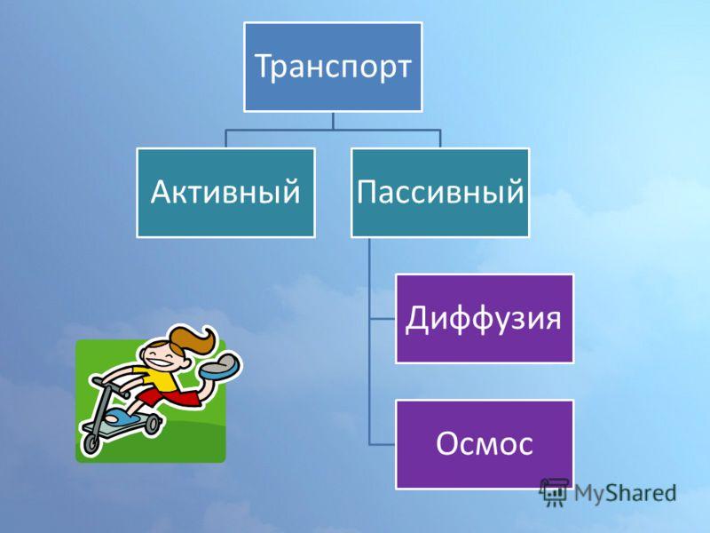 Транспорт АктивныйПассивный Диффузия Осмос