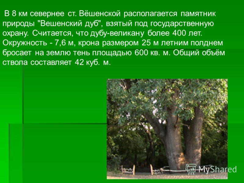 В 8 км севернее ст. Вёшенской располагается памятник природы