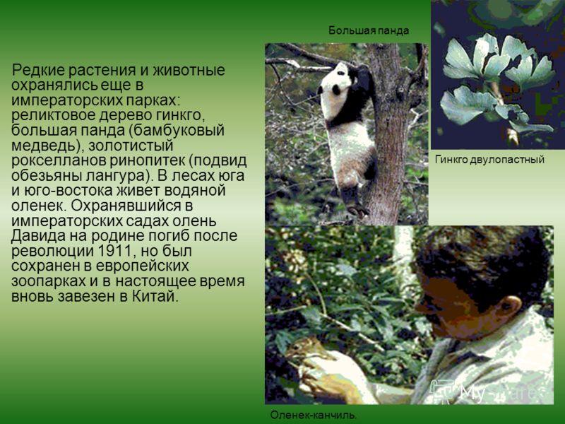 Редкие растения и животные охранялись еще в императорских парках: реликтовое дерево гинкго, большая панда (бамбуковый медведь), золотистый рокселланов ринопитек (подвид обезьяны лангура). В лесах юга и юго-востока живет водяной оленек. Охранявшийся в