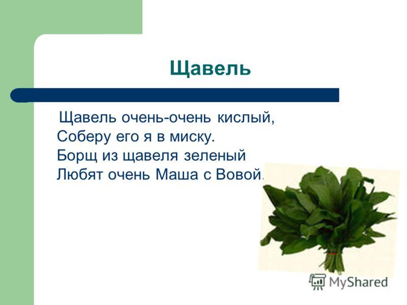 Щавель Щавель очень-очень кислый, Соберу его я в миску. Борщ из щавеля зеленый Любят очень Маша с Вовой.